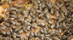 Bees in the hive close up Stock Footage