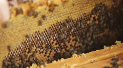 Honeycomb in the hive Stock Footage