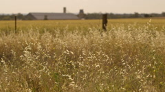 Farming wheat field landscape tilting up through the frame Stock Footage