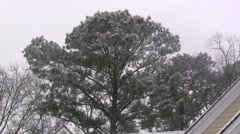 Tree on a Snowy Day Stock Footage