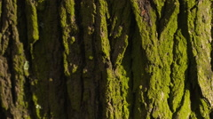 Bark of a Tree Stock Footage