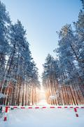 Fencing prohibiting travel to snow-covered forest. - stock photo