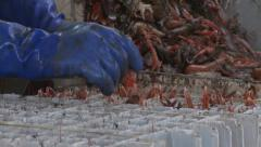 Fishing boat catching Langoustines Stock Footage