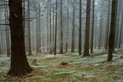 Frosty pine - wood Stock Photos