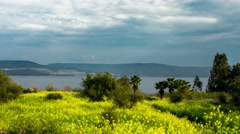 4K time lapse view of the yellow mustard flower field on the banks of the Sea of Stock Footage