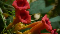 Magical flowers, beautiful flowers, nature, green, yellow flowers, growing flowe Stock Footage