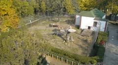 Subotica zoo Stock Footage