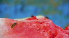 Watermelon, bees collect nectar watermelon on the table, honey, juice, melon, th Stock Footage