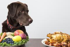 Dog with vegan and meat food Stock Photos