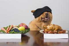 Blindfold taste game with dog Stock Photos
