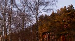 Autumn wood. Stock Footage