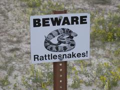 Rattlesnakes Beware! Stock Photos