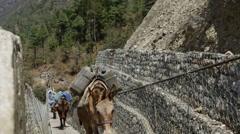 Lukla Nepal Donkey caravan walking accross suspension bridge outside of Stock Footage