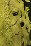 Close-up of tree bark on beech tree, Husum, Schlosspark, Schleswig-Holstein, Stock Photos