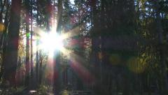 Rays of Sun Shining Through Forest Campground Stock Footage