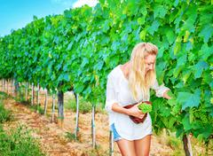Beautiful young winemaker - stock photo