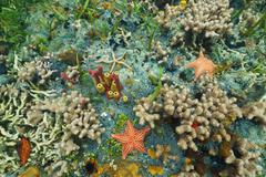 Colorful seabed with starfishes in Caribbean sea Stock Photos