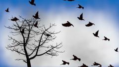 Birds flying into the clouds Stock Footage