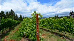 Hood River Oregon winery called Cathedral Ridge Winery with grapes and mountains Stock Footage