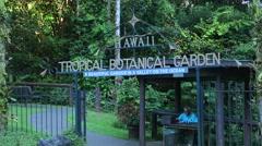Hilo Hawaii Big Island Hawaii Tropical Botanical Garden  green peaceful from Stock Footage