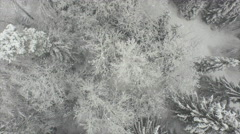 AERIAL: Flying above beautiful snowy forest in winter - stock footage