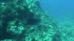 Sea fish. Sea View. Underwater video. Shark - stock footage