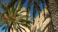 Spain Mallorca Island Alcudia 030 palm trees throw shadows on city wall Stock Footage