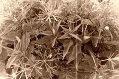 Nettle - stock photo
