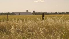 Farming wheat field in the dry Australian outback plains Stock Footage