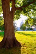 Stock Photo of Capitol building Washington DC sunset garden US