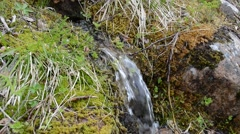Small fresh water spring emerging from green moss Stock Footage