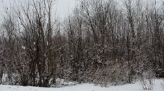 Big snow flakes falling down to ground in front of small forest Stock Footage