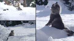 MONTAGE: Cat having fun in snowy winter Stock Footage