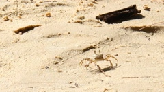 Crab walking on the sand beach Stock Footage