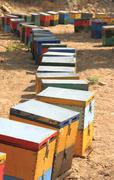 Coloured artificial beehives made of wood Stock Photos