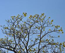crown young spring tree against the blue sky - stock photo