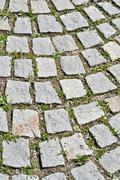 pavement stone tile with grass germination - stock photo
