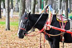 black horse in multicolored harness - stock photo