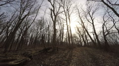 Panning shot of a forest in late fall or early winter Stock Footage