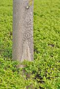 Trunk of a tree against a background of green foliage Stock Photos