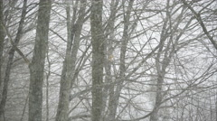 Forest Snow Storm in 4K (5 of 5) Stock Footage