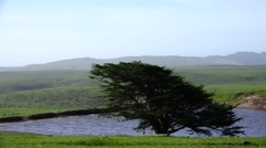 Point Reyes National Park, cattle pond Stock Footage