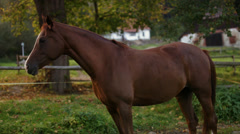 Horse standing in green meadow Stock Footage
