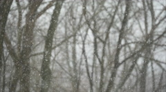 Forest Snow Storm in 4K (3 of 5) Stock Footage