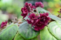 Crimson Flowers in the garden Stock Photos