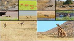 wild animals montage composite 4k - stock footage