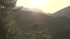 Tilting Upward Shot Of Pine & Sun Gleams Stock Footage