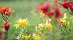 Colorful flowers in meadow, slide move Stock Footage
