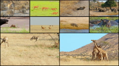 Wild animals collage montage sequence 4k Stock Footage