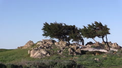 Cypress Trees on the California Coast Stock Footage